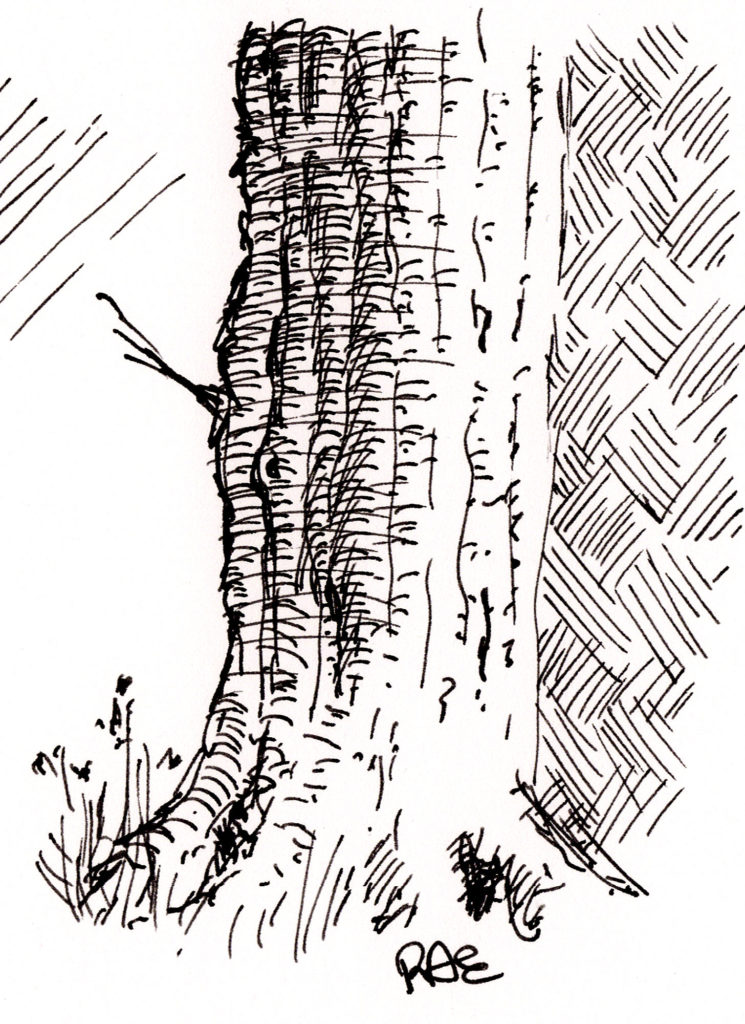 Tree bark sketch to test consistency of ink flow